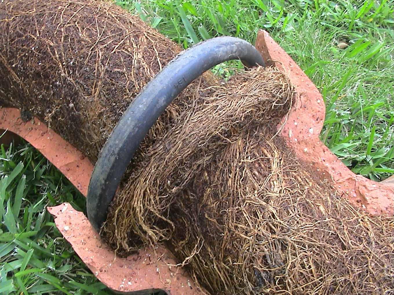 tree root ingress drains
